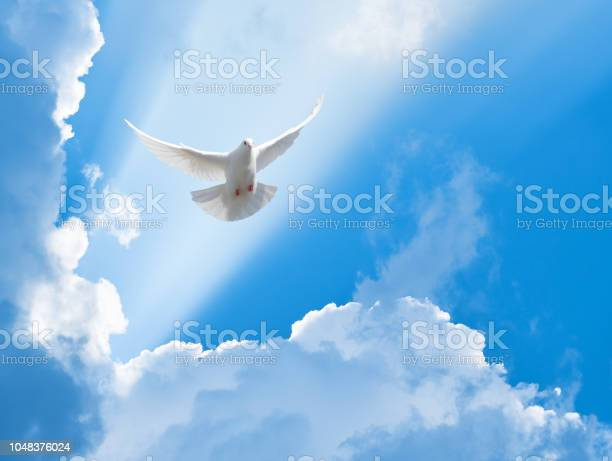 Photo of White dove flying in the sun rays among the clouds