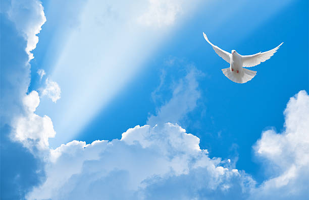 White dove flying in the sun rays among the clouds ストックフォト