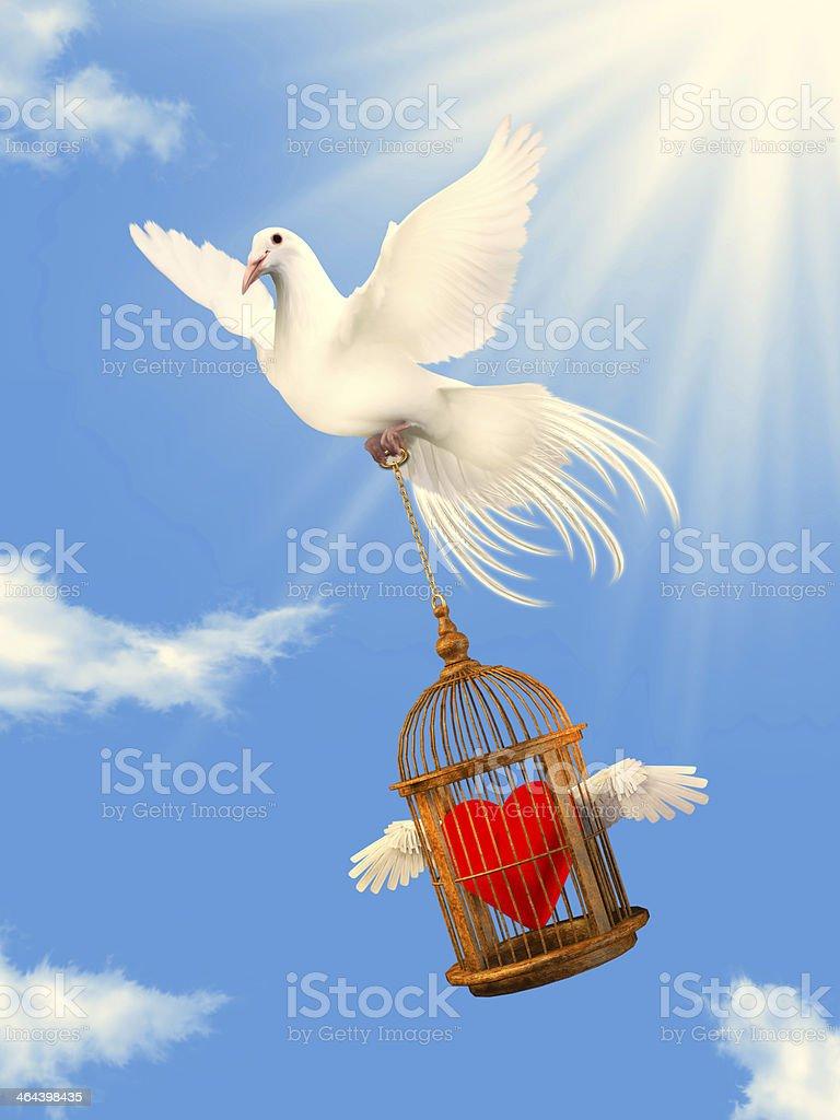 white dove helping loving heart stock photo