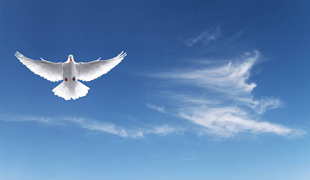 white dove in a blue sky, symbol of faith - symbols of peace stock pictures, royalty-free photos & images