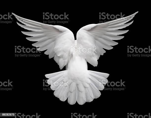 White dove in flight 2 picture id89282675?b=1&k=6&m=89282675&s=612x612&h=b2otqjz 8fhjgnb6ebikgpg10vdsodffzj4pf6bzkmc=