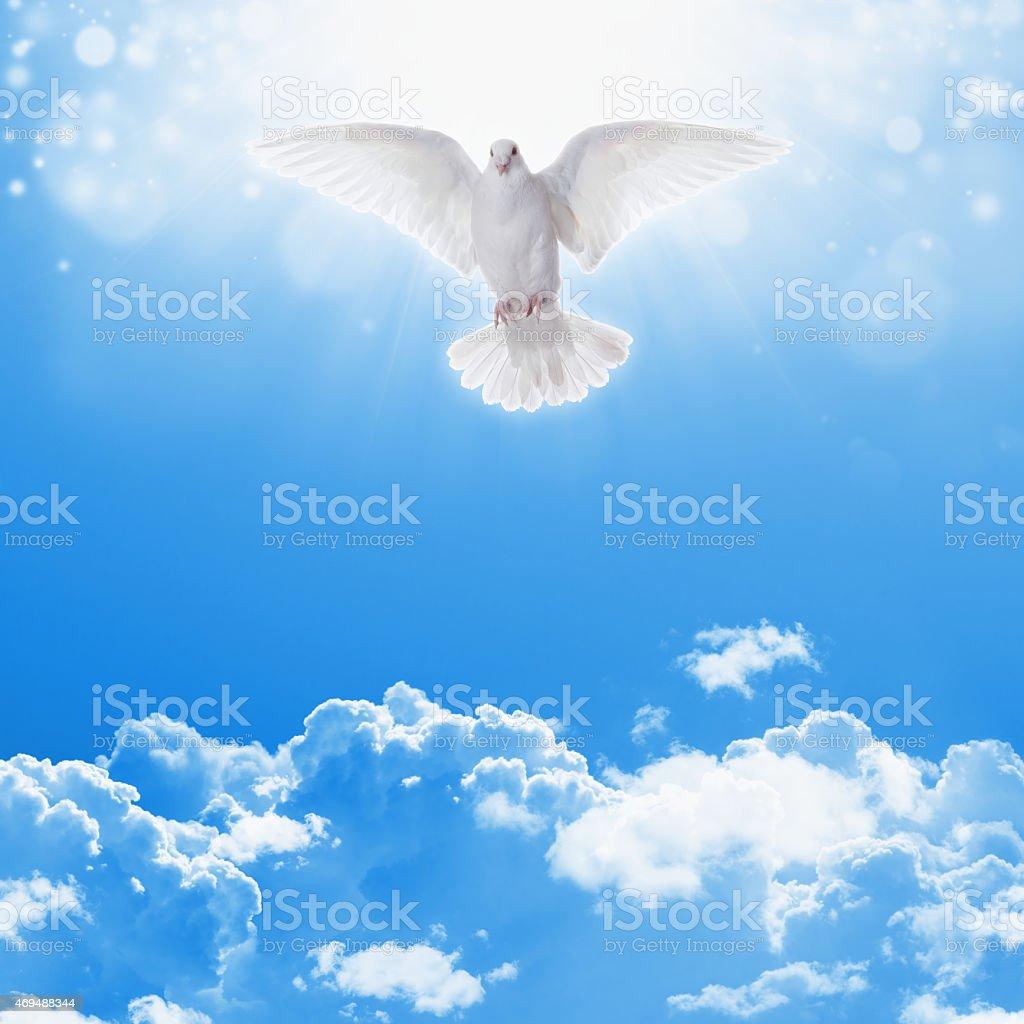 White dove in skies stock photo