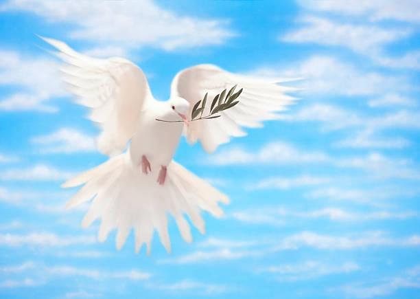 bianca colomba della pace con olive branch - ramoscello d'ulivo foto e immagini stock