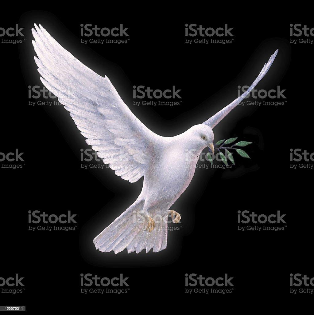 White Dove with Olive Branch - black backround stock photo