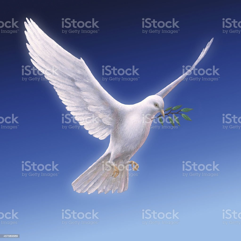 White Dove with Olive Branch - blue backround stock photo