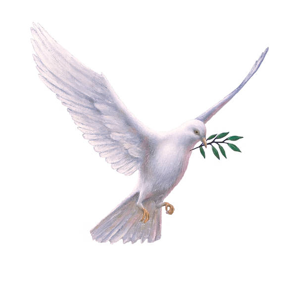 white dove with olive branch - symbols of peace stock pictures, royalty-free photos & images