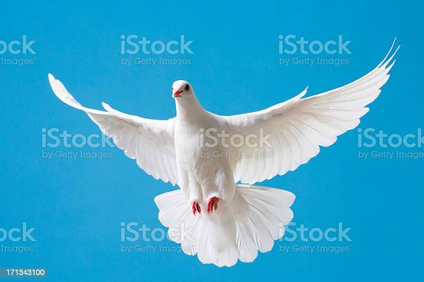 White dove with outstretched wings on blue sky picture id171343100?b=1&k=6&m=171343100&s=612x612&h= q2qrkoy mmoqtrvsyiviy1ukxkipymqij9jcgu kic=