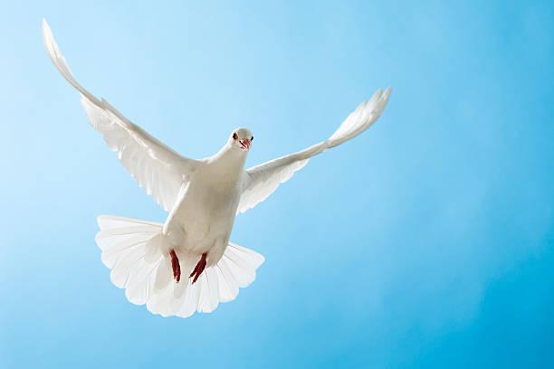 White dove mit ausgestreckten Flügel auf blue sky – Foto