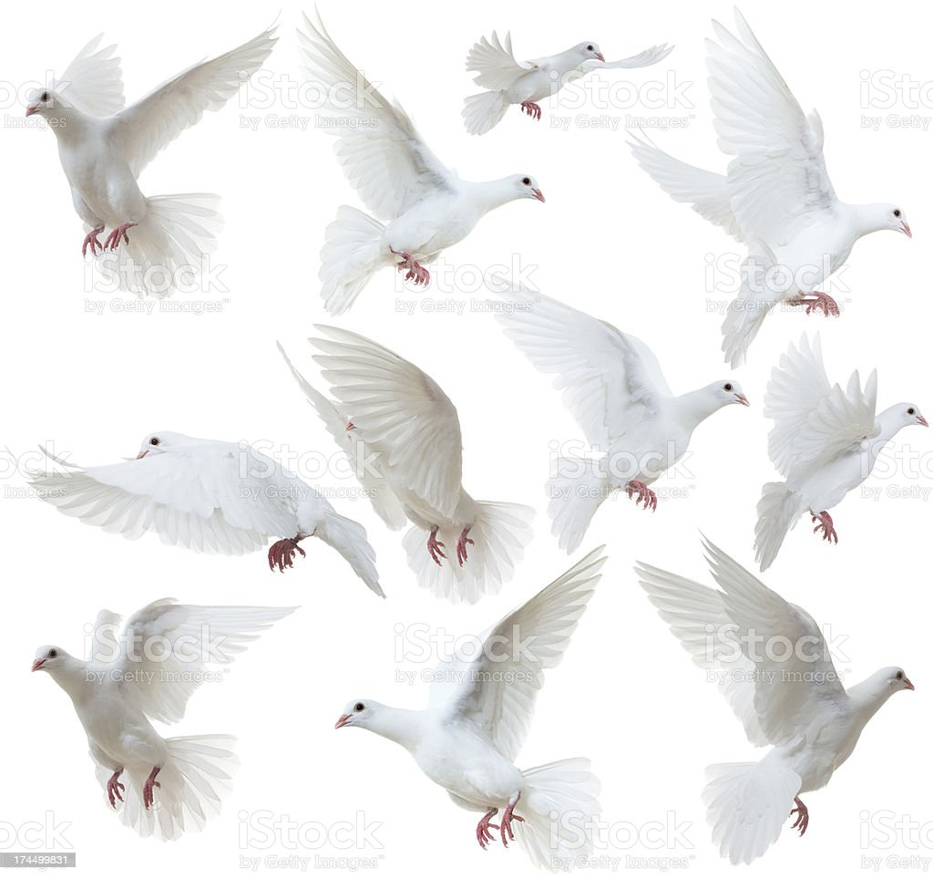 White Doves flying away stock photo
