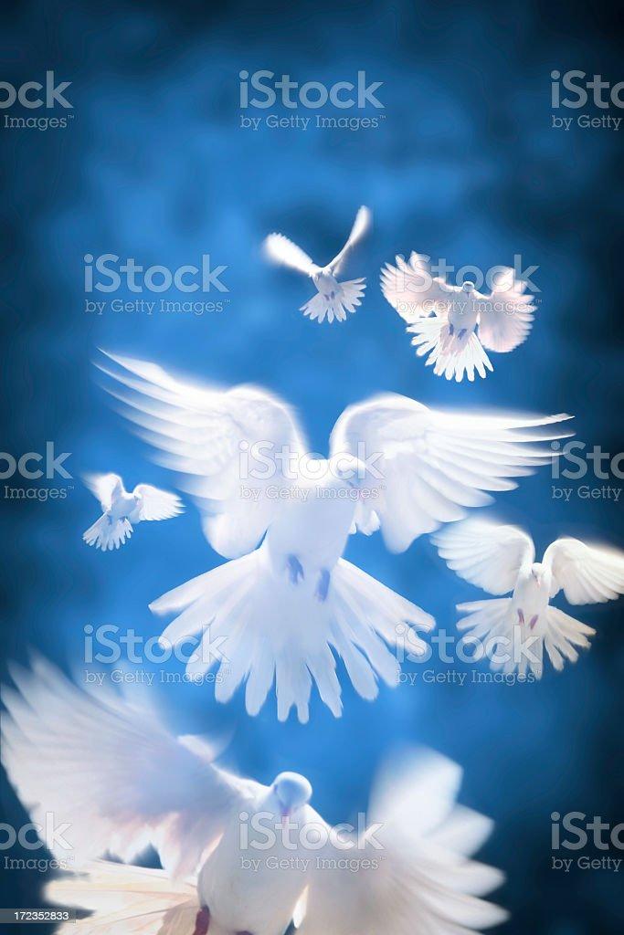 White Doves stock photo