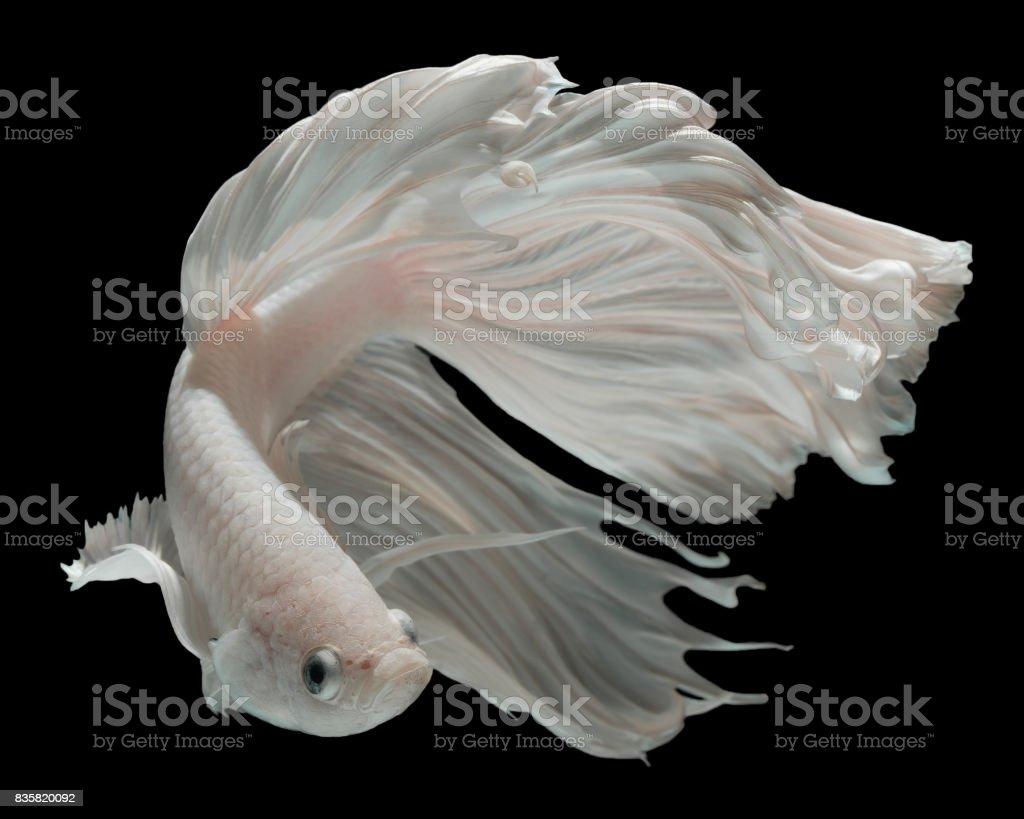 White Dragon stock photo