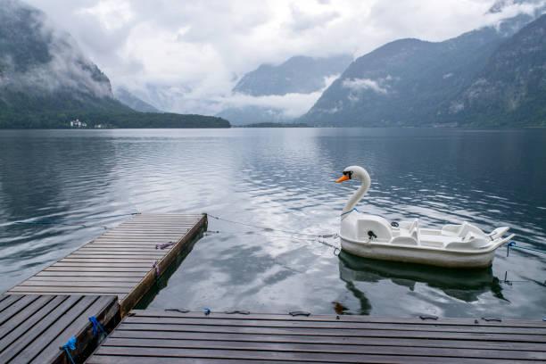 barco blanco pato en el lago - foto de stock