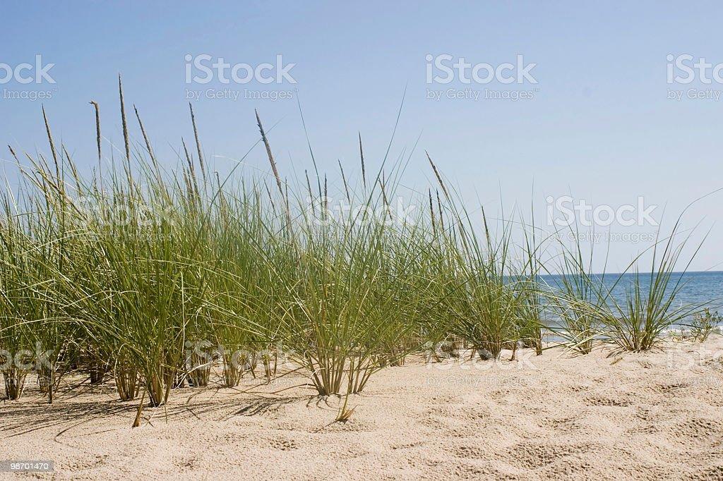 White Dune Beach 3 royalty-free stock photo