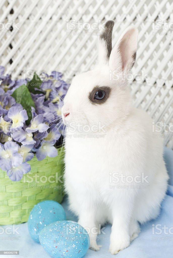 White Dwarf Easter Bunny royalty-free stock photo