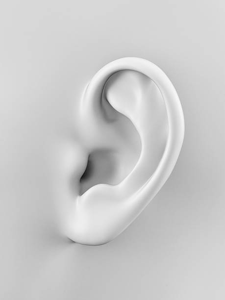white ear stock photo