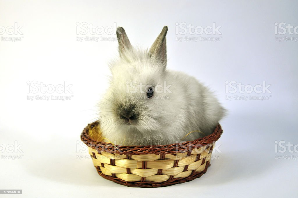 white Easter rabbit in a basket royalty-free stock photo