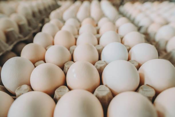 wit ei op de doos - chicken bird in box stockfoto's en -beelden
