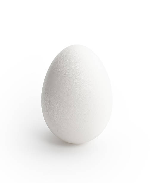 White Egg Standing On White Background stock photo