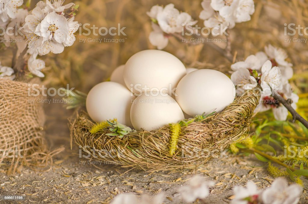 White eggs and apple blossoms royalty-free stock photo