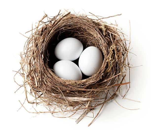 White eggs in the nest stock photo