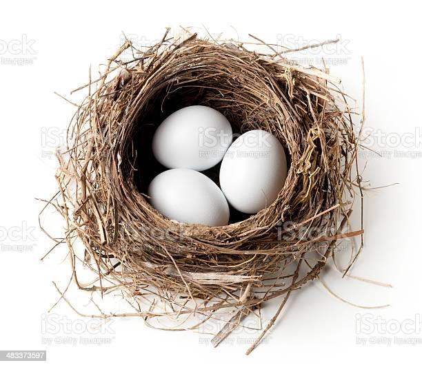 White eggs in the nest.