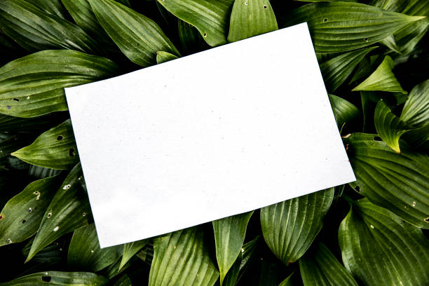 White empty leaf among green leaves stock photo
