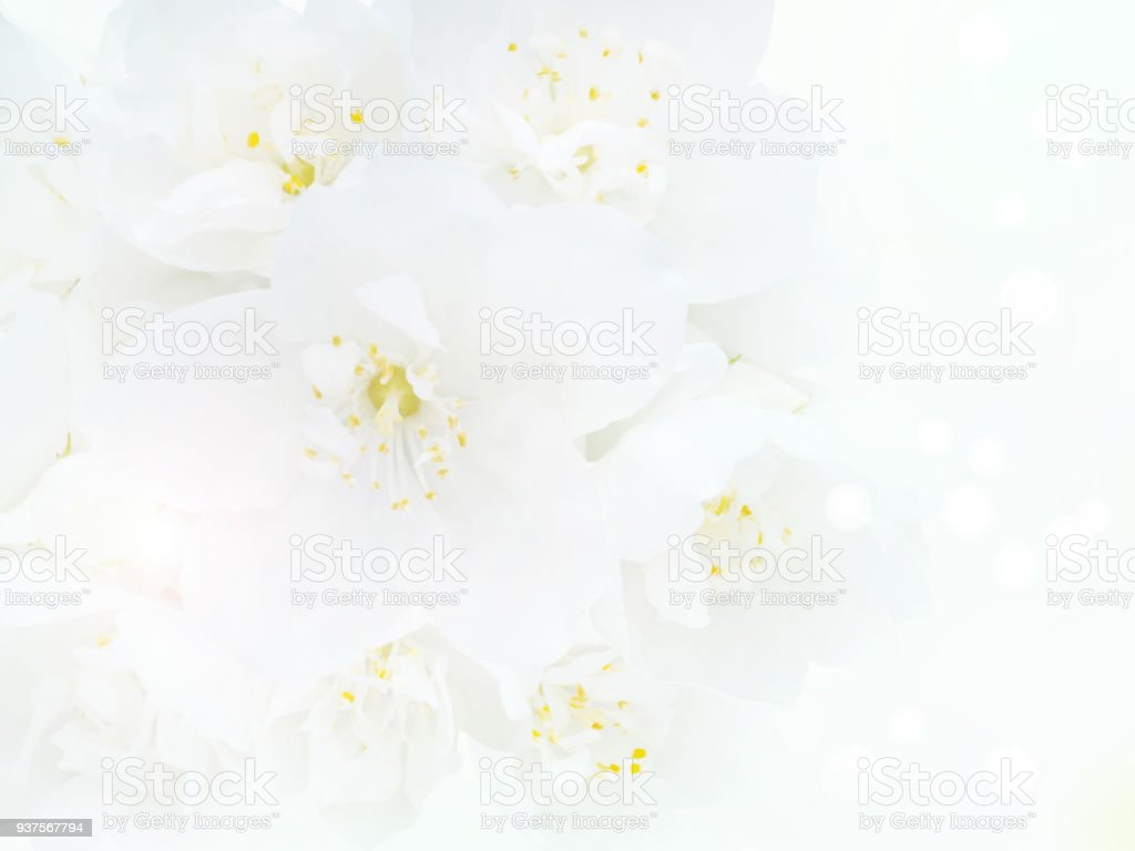 White English Dogwood Flowers Bouquet Stock Photo & More Pictures of ...