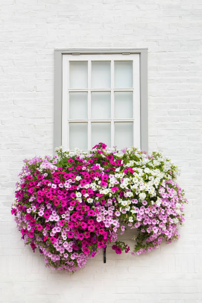 White facade with window and flowers in flower box stock photo