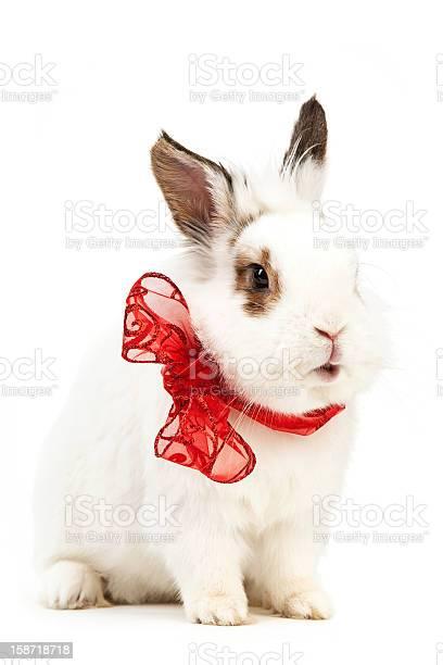 White fancy rabbit with a bow picture id158718718?b=1&k=6&m=158718718&s=612x612&h=0snkukvo2kzpmtdsjtv7m0v0da4exc2rff6gefwdzpc=