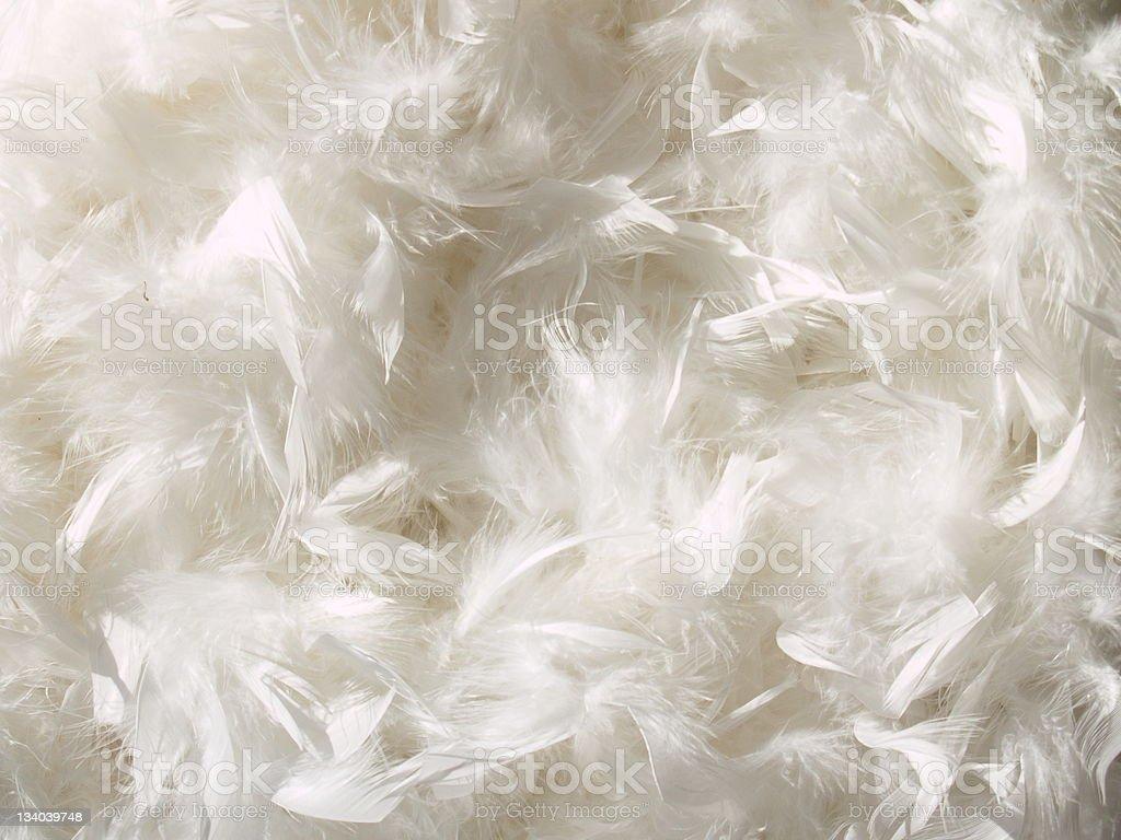 White Feather Background stock photo