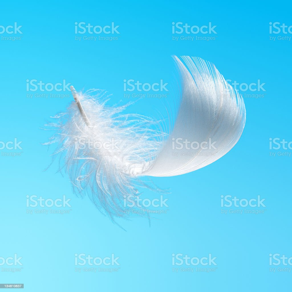 White feather in the sky stock photo