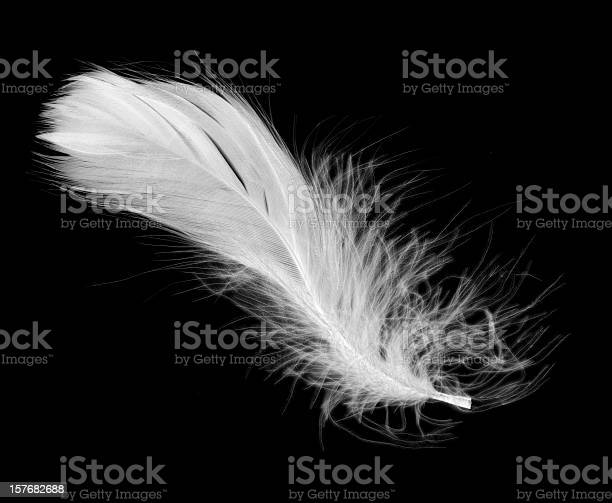 White feather isolated on a black background picture id157682688?b=1&k=6&m=157682688&s=612x612&h=aunpbjkhfoutkuplnw7vmknpgrzbiwzmxvn1hblrc u=