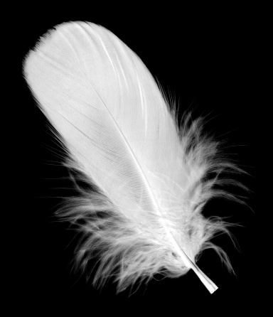 Close-up of Pelicans feather on its body (soft focus)