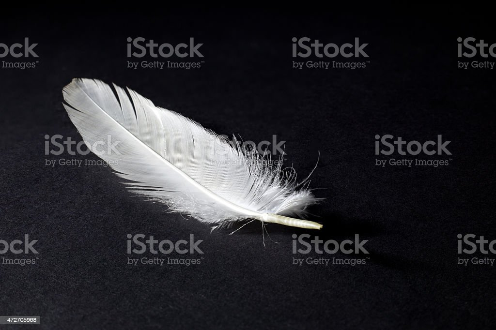 White Feather Isolated on Black stock photo