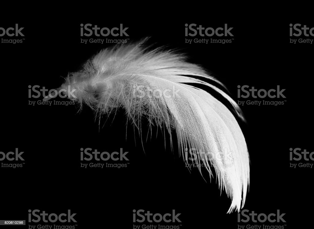 white feather on black background stock photo