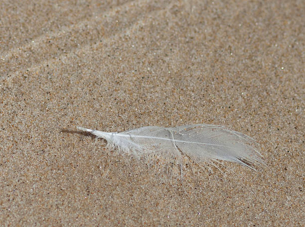 White feather on sand stock photo