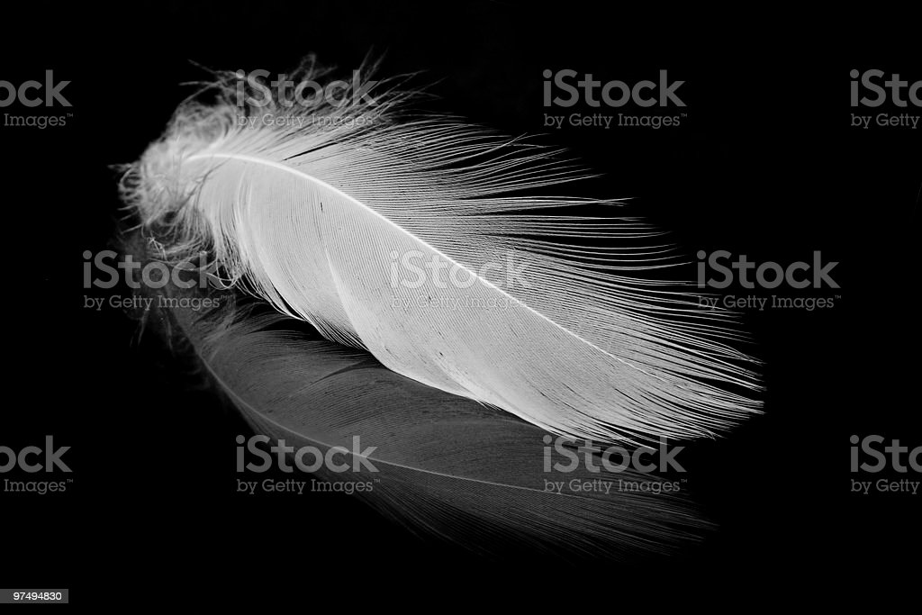 White feather on the black. royalty-free stock photo