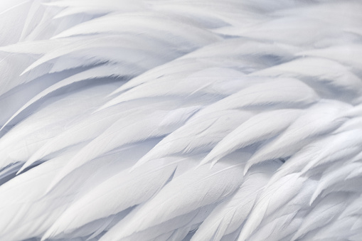 Feather abstract freedom concept. Light fluffy white feather floating in a blue sky.
