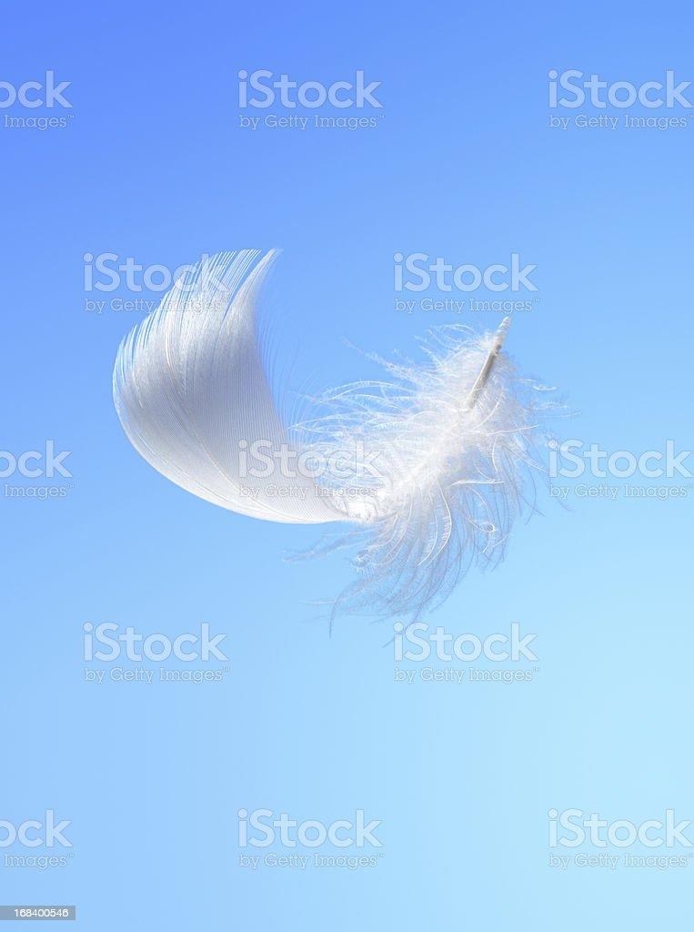 White feather stock photo