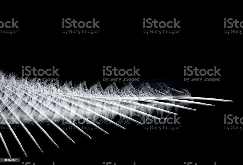 white  feather royalty-free stock photo