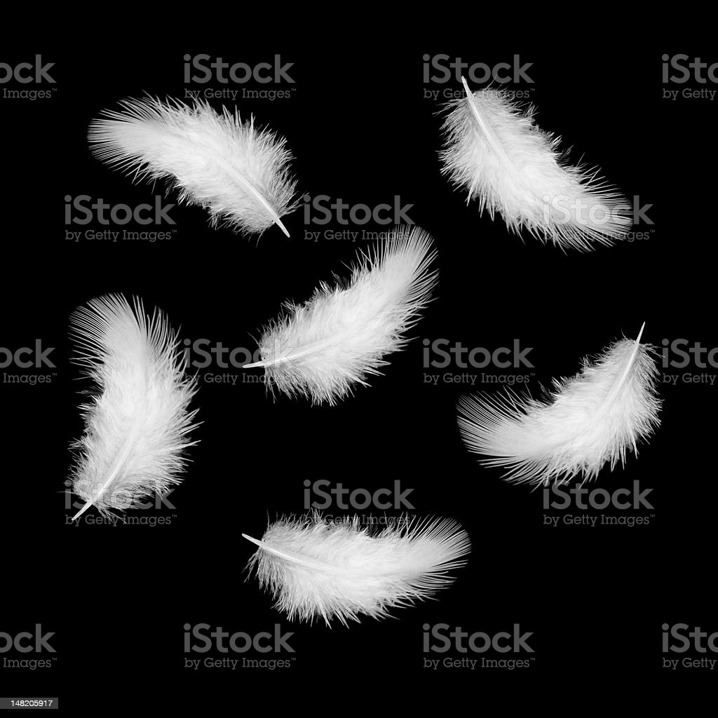 White feathers against black background stock photo