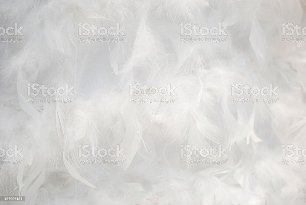 White feathers background stock photo