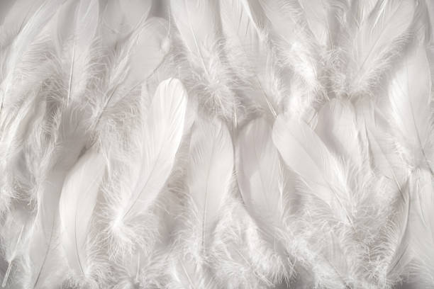 white feathers background - feather stock photos and pictures