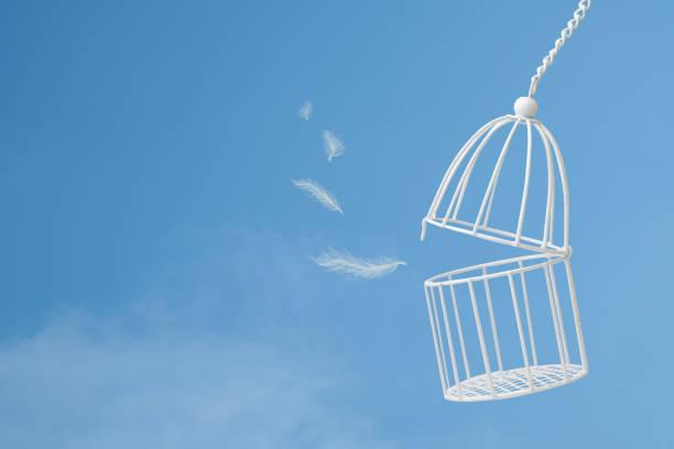 witte veren drijven buiten vogelkooi op blauwe hemel met cloud achtergrond, idee concept van vrijheid - kooi stockfoto's en -beelden