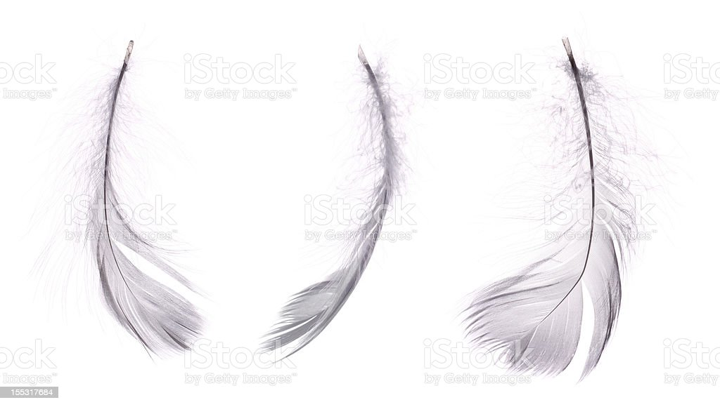 3 white feathers stock photo