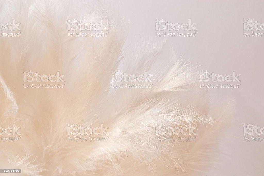 white feathers stock photo