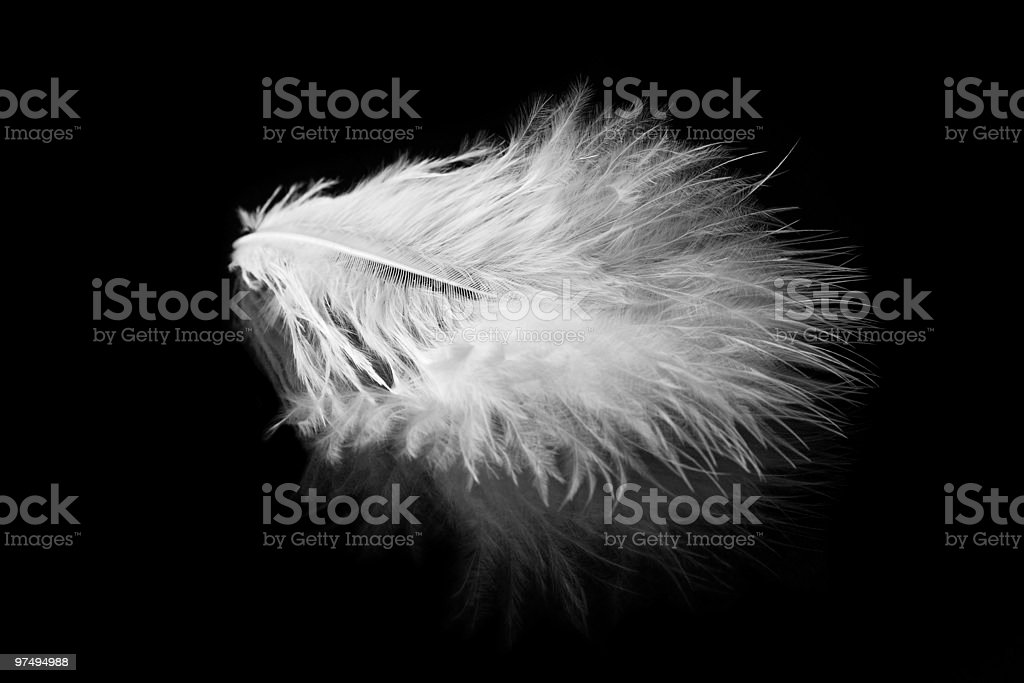 White feathers serie royalty-free stock photo