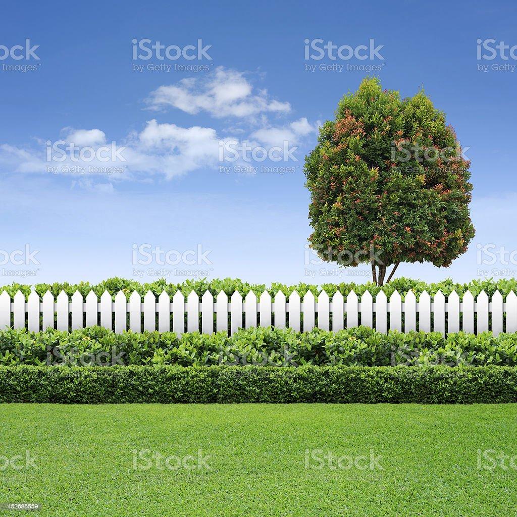weißer zaun und hecke am blauen himmel mit baum stock-fotografie und