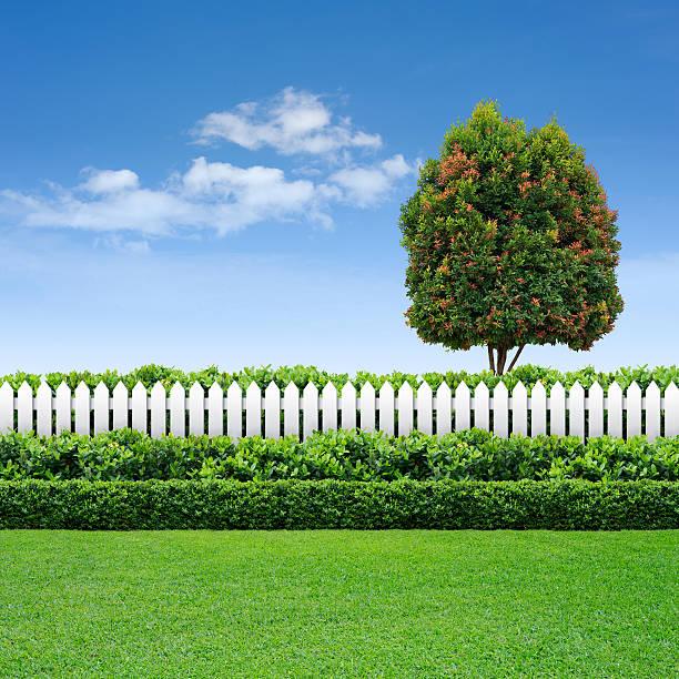 weißer zaun und hecke am blauen himmel mit baum - lattenzaun garten stock-fotos und bilder