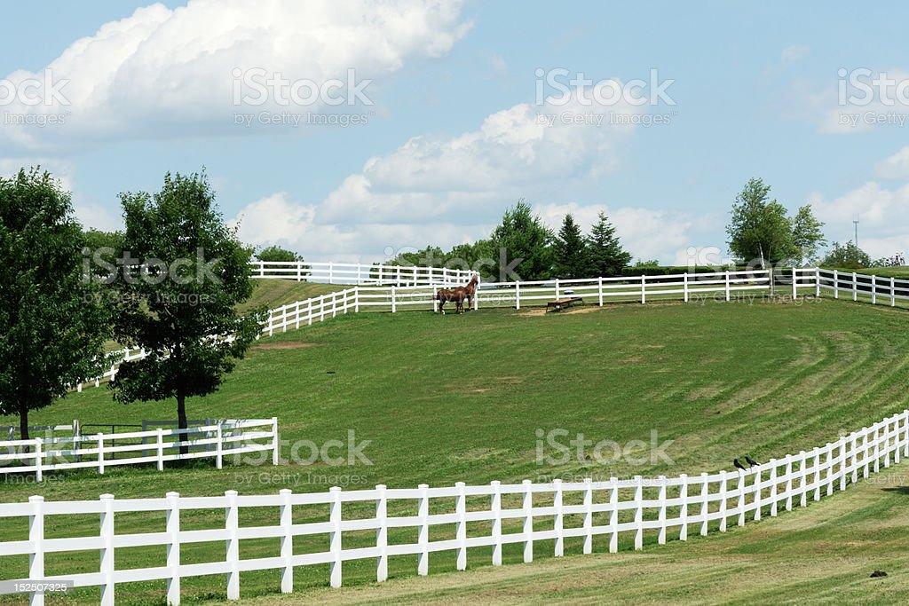 Weißen Zäunen und braunes Pferd – Foto